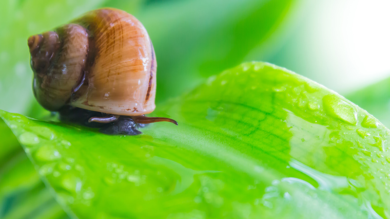 Rain-resistant controls offer long-lasting protection against slugs and snails who may destroy crops.