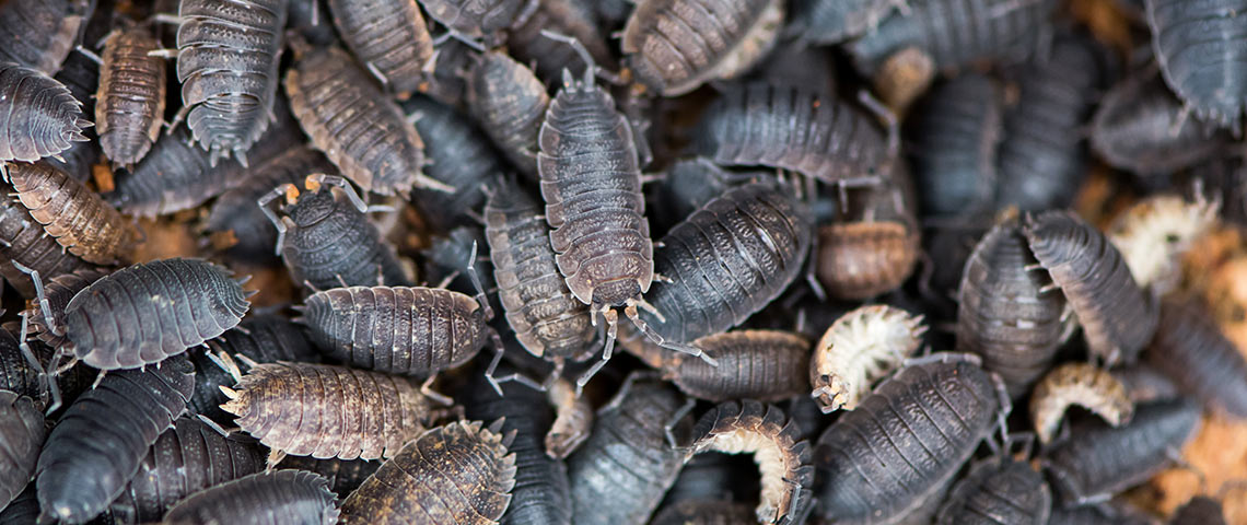 How To manage Pests In Your Garden