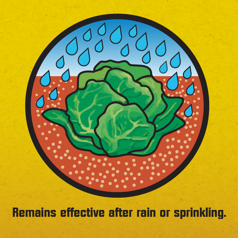 Corry's slug and snail bait remains effective after rain or sprinklers